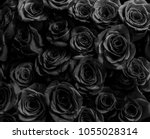 black roses isolated on a black ... | Shutterstock . vector #1055028314