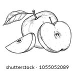 apple fruit vector illustration.... | Shutterstock .eps vector #1055052089