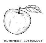 apple fruit vector illustration.... | Shutterstock .eps vector #1055052095