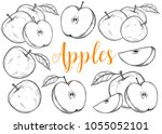 apple fruit vector set.... | Shutterstock .eps vector #1055052101