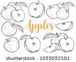 apple fruit vector set.... | Shutterstock .eps vector #1055052101