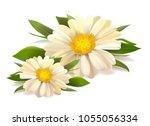 vector white chamomile flower... | Shutterstock .eps vector #1055056334