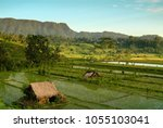 balinese rice terraces in the...   Shutterstock . vector #1055103041