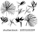 line drawn vector tropical... | Shutterstock .eps vector #1055103209