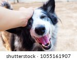 Stock photo a happy face of dog when she receives love 1055161907