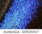trogonoptera brookiana   rajah... | Shutterstock . vector #1055252417