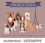 dogs by country of origin.... | Shutterstock .eps vector #1055260595