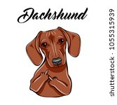 dachshund middle finger gesture....   Shutterstock . vector #1055315939