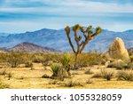 joshua tree  or yucca... | Shutterstock . vector #1055328059