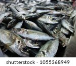 fresh fishes in a market.    Shutterstock . vector #1055368949
