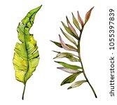 tropical hawaii leaves tree in... | Shutterstock . vector #1055397839