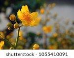 Yellow Flower In Springtime ...