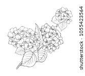 blooming flower hydrangea on...   Shutterstock .eps vector #1055423564