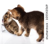 Kitten With Mirror On White...