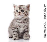 Stock photo kitten on a white background 105543719