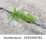 green grass on crack concrete... | Shutterstock . vector #1055440781