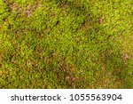 Moss Covered Forest Floor Seen...
