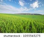 sunrise in grean meadow of...   Shutterstock . vector #1055565275