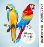 tropical parrots collection | Shutterstock .eps vector #1055571509