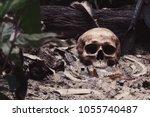 Still Life Image Of Skull And...