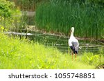 lovely stork in the grass | Shutterstock . vector #1055748851