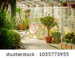 Succulents In Glass House In...