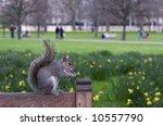 Cute Squirrel Sitting On Bench...