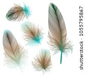 set colored feathers. vector... | Shutterstock .eps vector #1055795867