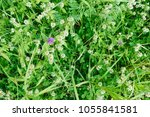 above fresh white clover... | Shutterstock . vector #1055841581