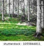summer forest jungle. plants...   Shutterstock . vector #1055866811
