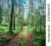 beautiful wild forest. summer...   Shutterstock . vector #1055866835
