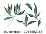 collection of peony leaves... | Shutterstock . vector #1055882765