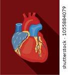 anatomy of human heart. vector... | Shutterstock .eps vector #1055884079
