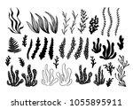 Hand Drawn Alga  Sea Plants An...