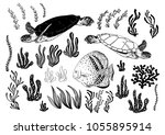 hand drawn turtles  fish  alga  ... | Shutterstock .eps vector #1055895914