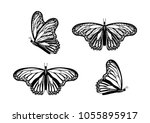 hand drawn butterflies black... | Shutterstock .eps vector #1055895917