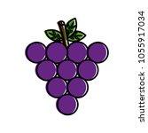bunch grapes fruit nutrition... | Shutterstock .eps vector #1055917034