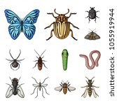 different kinds of insects... | Shutterstock .eps vector #1055919944