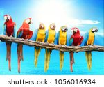 flock of red and blue yellow... | Shutterstock . vector #1056016934