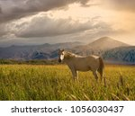 mountains and pastures in... | Shutterstock . vector #1056030437