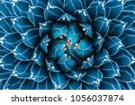 Stock photo agave cactus abstract natural pattern background dark blue toned 1056037874