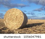 Rolled Bale Of Hay In Field ...