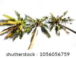 coconut palm tree isolated | Shutterstock . vector #1056056759