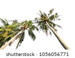 coconut palm tree isolated | Shutterstock . vector #1056056771