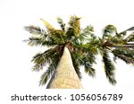 coconut palm tree isolated | Shutterstock . vector #1056056789