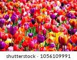 flower river in keukenhof park... | Shutterstock . vector #1056109991