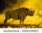 black rhino standing proud in a ... | Shutterstock . vector #1056159821