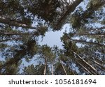 tree crowns and blue sky. low... | Shutterstock . vector #1056181694