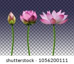 a set of lotus flowers on a... | Shutterstock .eps vector #1056200111
