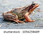 Macro Photo Of Brown Frog  The...